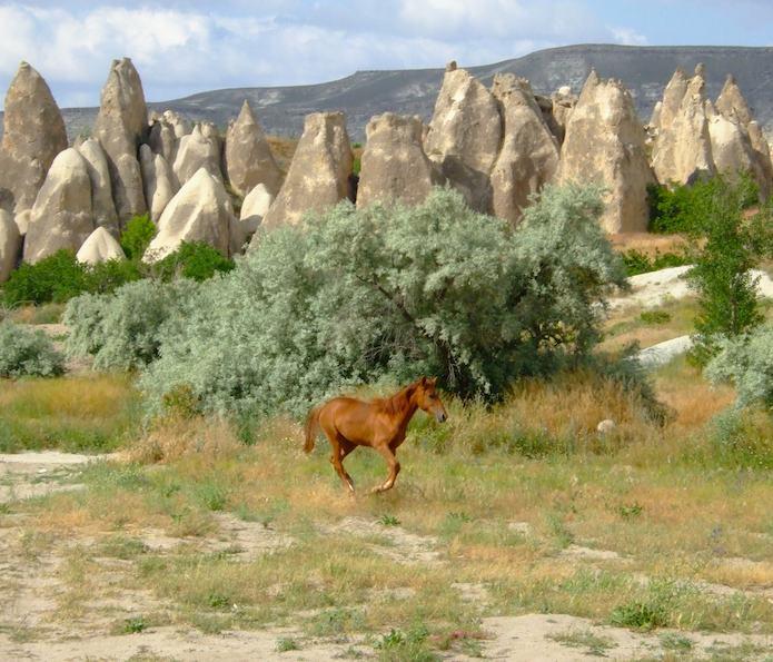 Wild Horse, Cappadocia