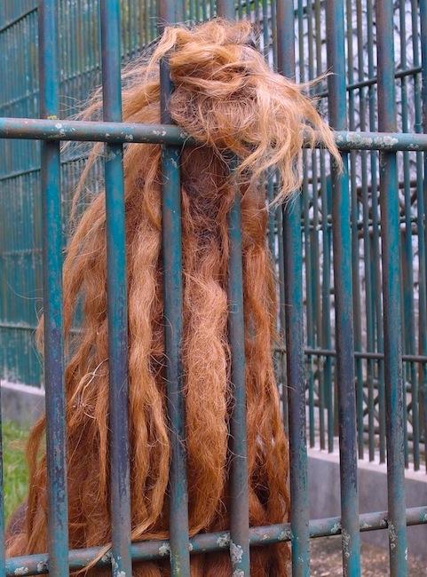 Orang hair
