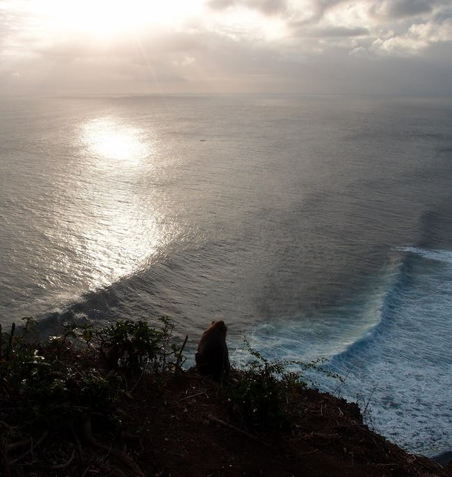 Monkey watching sunset at Uluwatu, Bali