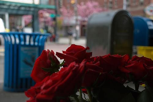 Beauty Beholder Roses
